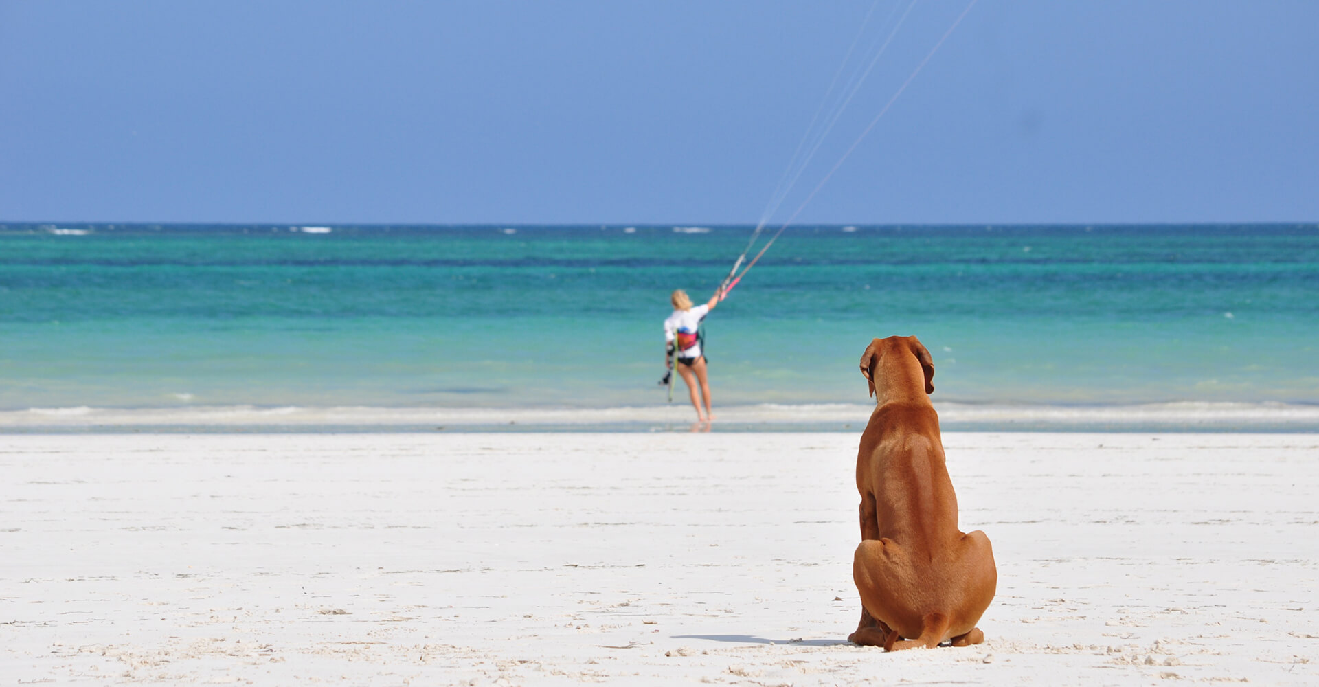 watchdog-kiting-galu-beach-kenya-coast.jpg